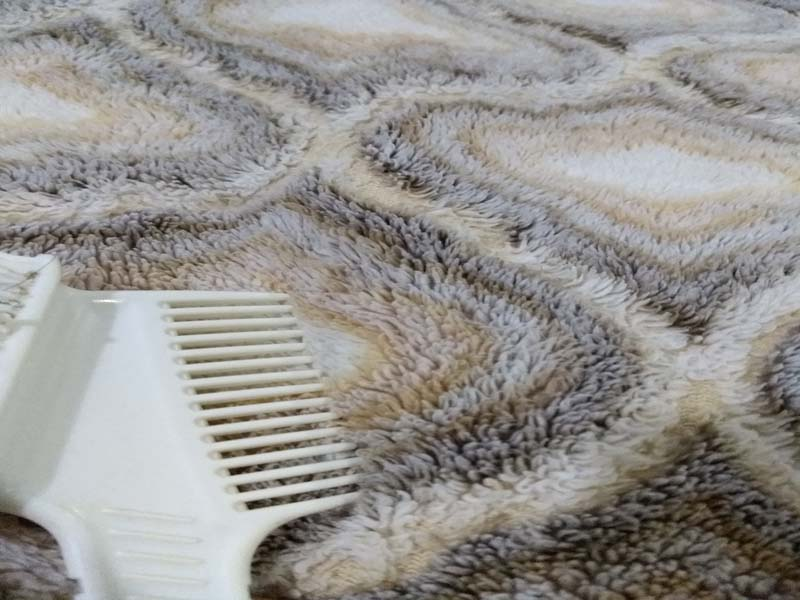 carpet cleaning in Bend, Oregon